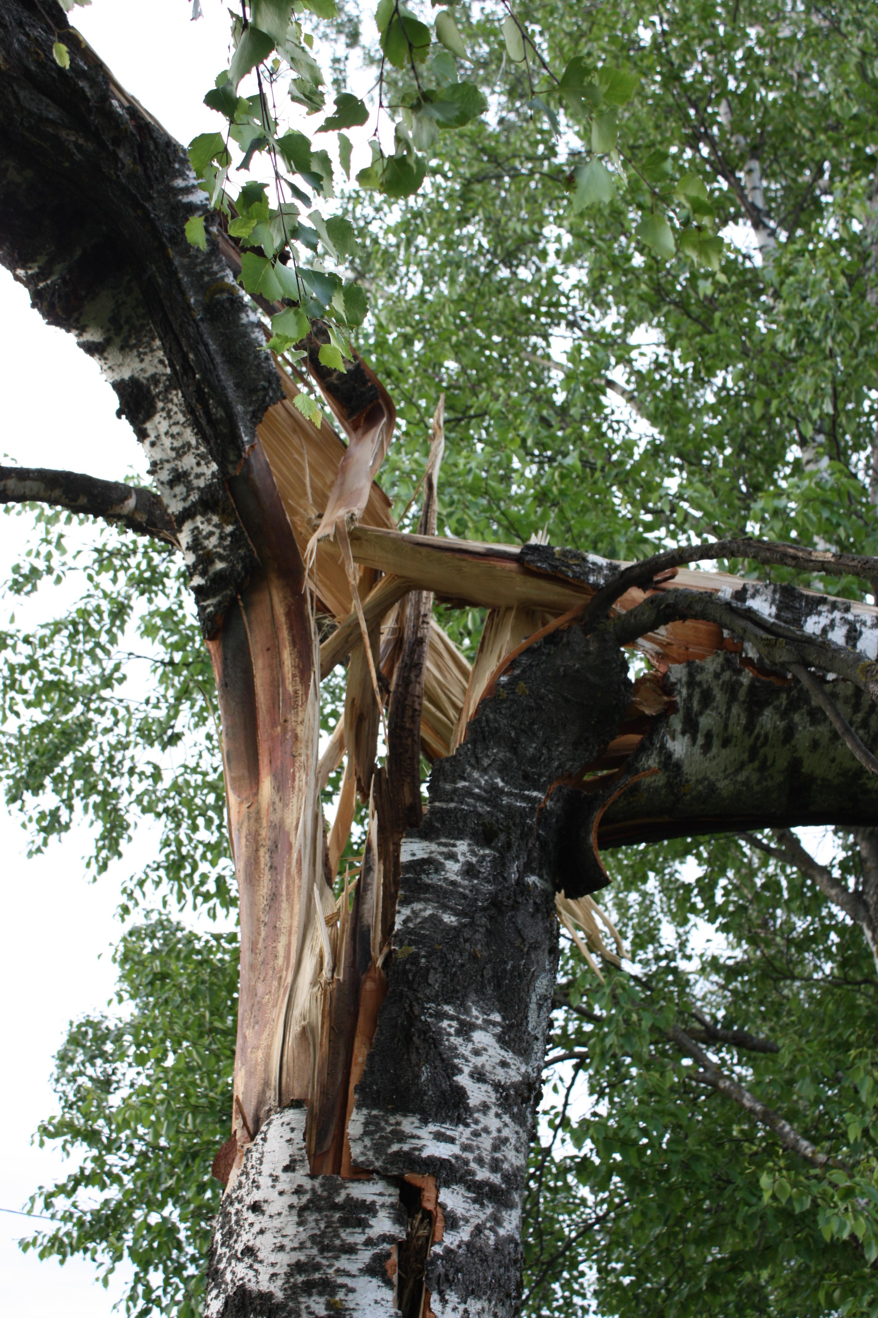 Ураган накрыл подсобное хозяйство в деревне Мачево 0b45f80c59f