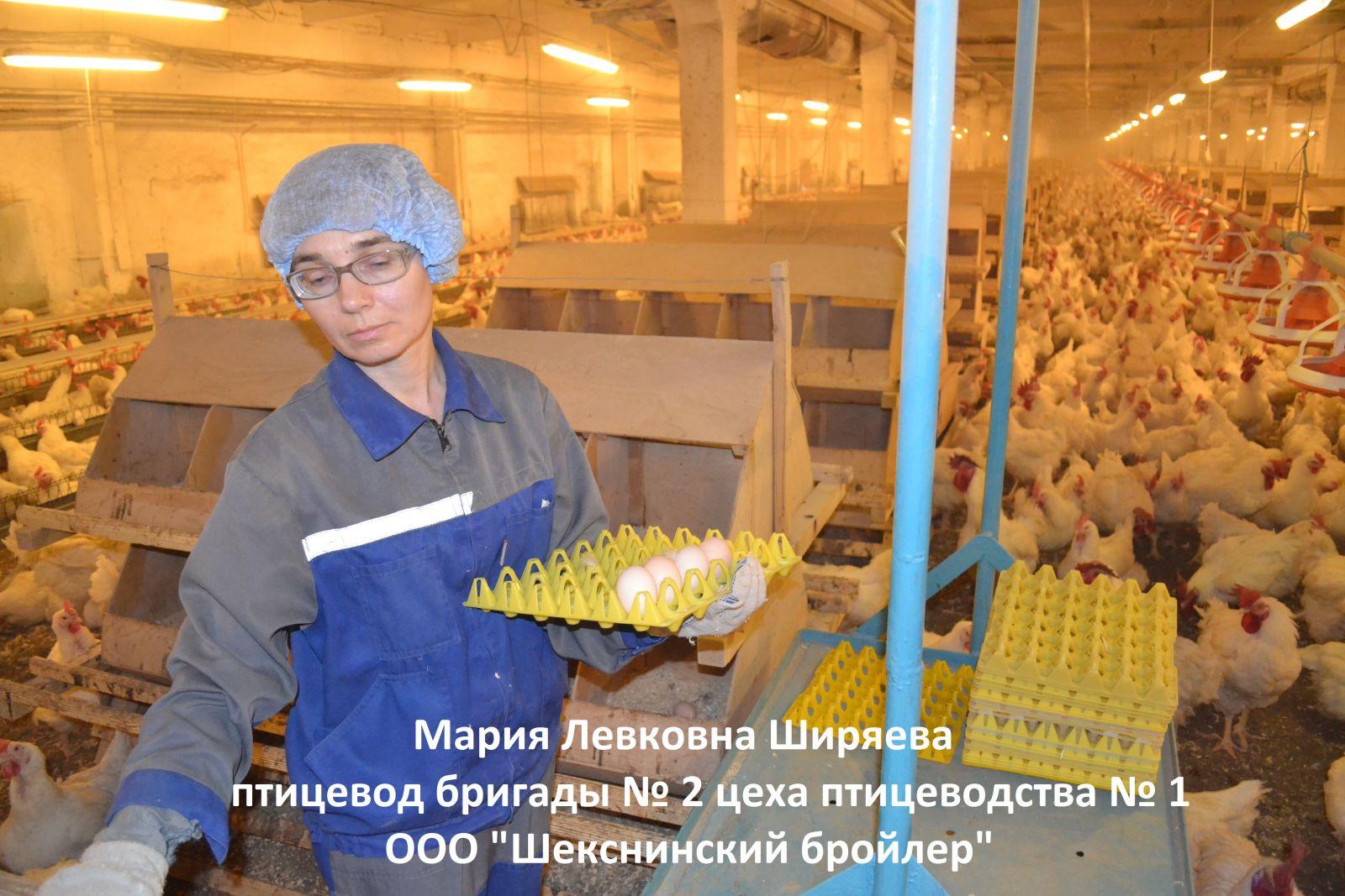Поздравления с днем рождения директора птицефабрики