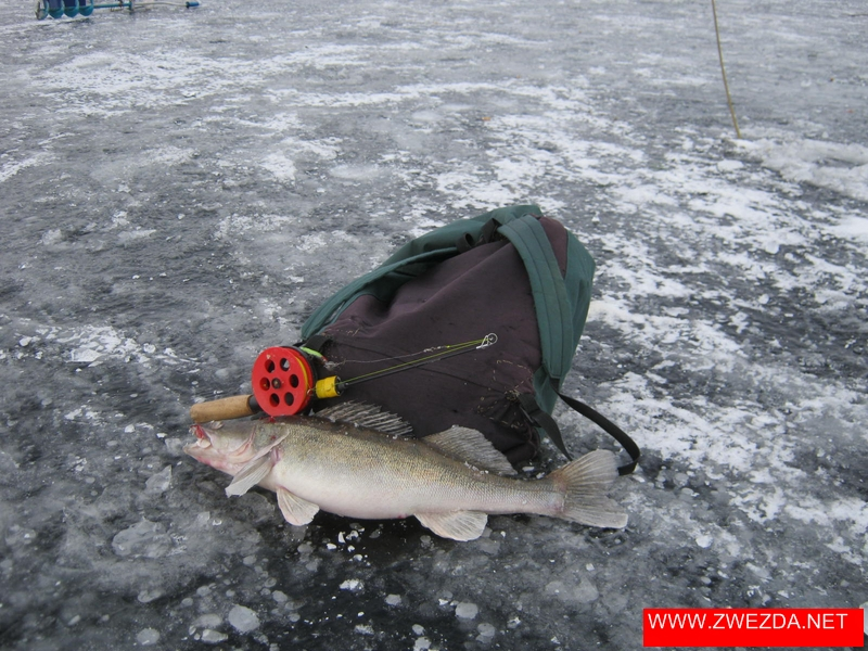 Рыбалка на шексне зимой